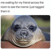 Friends, Funny, and Lol: me waiting for my friend across the  room to see the meme i just tagged  them in Tag ya meme friends lol