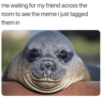 Meme, Memes, and Tagged: me waiting for my friend across the  room to see the meme i just tagged  them in Accurate 😂