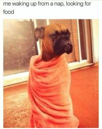 Food, Tumblr, and Http: me waking up from a nap, looking for  food @studentlifeproblems