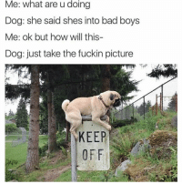 Bad, Bad Boys, and Definitely: Me: what are u doing  Dog: she said shes into bad boys  Me: ok but how will this-  Dog: just take the fuckin picture  KEEP She's definitely giving me sloppy toppy now 😉👍 #TagAFriend #FollowMeForFunnyStuff