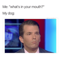 "Funny, Girl Memes, and Dog: Me: ""what's in your mouth?""  My dog: Drop it"