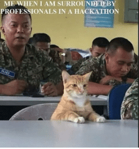 True, True Story, and Story: ME WHEN I AM SURROUNDED:BY  PROFESSIONALS IN A HACKATHON True story