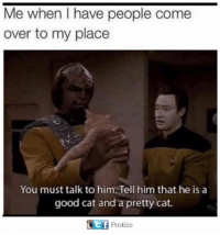 Come Over, Memes, and Good: Me when I have people come  over to my place  You must talk to him. Tell him that he is a  good cat and a pretty cat.  t if  Postize
