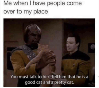Cats, Come Over, and Grumpy Cat: Me when I have people come  over to my place  You must talk to him. Tell him that he is a  good cat and a pretty cat.