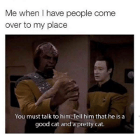 Come Over, Good, and MeIRL: Me when I have people come  over to my place  You must talk to him. Tell him that he is a  good cat and a pretty cat. Meirl