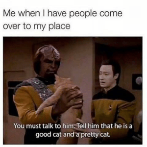 Come Over, Good, and Wholesome: Me when I have people come  over to my place  You must talk to him. Tell him that he is a  good cat and a pretty cat. wholesome apartments :)