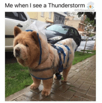 "Chicago Bulls, Low Key, and Memes: Me when I see a Thunderstorm  @DrSmashlove (@dizzle_saint_james) Is it just me or do this doggo look like a Polish grandmother named Aleksandra who just watched her granddaughter Maja park her new Audi Q7 Prestige Edition SUV knowing damn well Maja's only 21 and ain't got no damn $70,000 for a car so she low key worried that the rumors that Maja's getting piped by a Chicago Bull might be true but on the other hand Aleksandra was raised with the bitter poverty of Soviet communism and is therefore pleased that Maja is driving a car the size of Aleksandra's childhood home even at the cost of little bitty Maja (all 5'1"" of her) getting torn apart by a PP that is not much smaller than she is RelaxGrandma SheLovesIt WinWin GodBlessMurica EveryWomanNeedsALilDeathByDick ItsGoodForTheComplexion 😍😂😂😂"