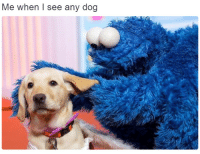 Me When I See: Me when I see any dog