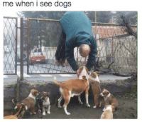 Me When I See: me when i see dogs