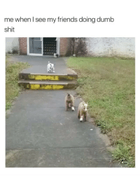 Dumb, Friends, and Shit: me when I see my friends doing dumb  shit Yeee