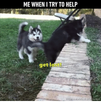 9gag, Memes, and Apps: ME WHEN I TRY TO HELP  get lost  Bisigeran huskies Follow @9gag for more cuteness App📲👉@9gagmobile 👈 9gag husky relationshipgoals friendship siblings cute fluffy (credit: @mywinterfells.siberian_huskies )