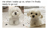 Funny, Animal, and Cool: me when i wake up vs. when i'm finally  ready to go out 22 Cool Animal Pictures From This Week That Are Actually Funny