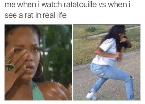 Life, Ratatouille, and Watch: me when i watch ratatouille vs when i  see a rat in real life