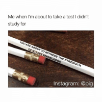 Memes, 🤖, and Pig: Me when I'm about to take a test I didn't  study for  YOU ARE ABOUT OF TO WITNESS THE STRENGTH  Inst agram: @pig breh