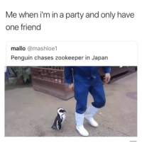 Party, Japan, and Penguin: Me when i'm in a party and only have  one friend  mallo @mashloe1  Penguin chases zookeeper in Japan 😂😂😂😂😂