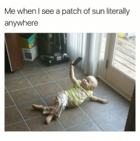 Memes, Live, and World: Me when l see a patch of sun literally  anywhere The world we live in now