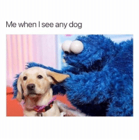 @hilarious.ted is my favorite animal memes page 😭💯💕: Me when l see any dog @hilarious.ted is my favorite animal memes page 😭💯💕