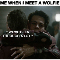 😱 anyone relate ? 😂: ME WHEN MEET A WOLFIE  WE'VE BEEN  THROUGH A LOT 😱 anyone relate ? 😂