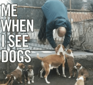Dogs, Grumpy Cat, and Worth It: ME  WHEN  SEE  DOGS The Discomfort Is Worth It