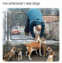 iiii must pet them all: me whenever i see dogs iiii must pet them all