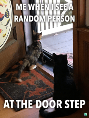 Random, Step, and Door: ME WHENISEE A  RANDOM PERSON  AT THE DOOR STEP Stranger danger