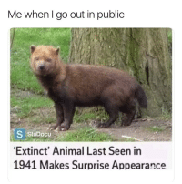 Funny, Animal, and Girl Memes: Me whenl go out in public  StuDocu  Extinct' Animal Last Seen in  1941 Makes Surprise Appearance  riendofbae Don't make any sudden movements. I'm easily startled