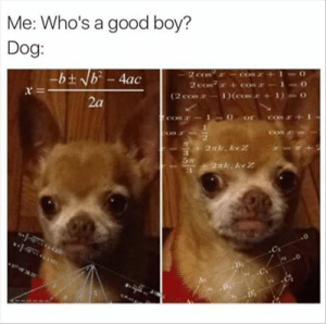 Animals, Dogs, and Memes: Me: Who's a good boy?  Dog:  -b ± b2-4ac  r-  2a Dog Memes Of The Day 32 Pics – Ep44 #dogs #dogmemes #lovelyanimalsworld - Lovely Animals World