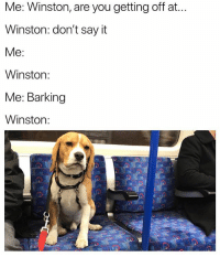 Say It, Good, and British: Me: Winston, are you getting off at.  Winston: don't say it  Me:  Winston:  Me: Barking  Winston: Winston is a good boy😍 (@benrebuck)