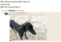 Reddit page dedicated to rare puppers: ME: Wow its pretty late i have to  study now  (Me 30 minutes later)  RAREPUPPERS Comments  show images (1)  much confuse Deer or d  (imguccom)  2108  submitted 20 hours ago by lordzamorak O  62 comments source share save hide give gold report hide all child comments  hosted on imgur Reddit page dedicated to rare puppers