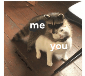 https://t.co/zlfVhocJlP: me  you  @insta raccoon_gram https://t.co/zlfVhocJlP