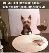 My dream date on Valentine's day. Follow @9gag @9gagmobile 9gag yorkie 9gagbestdate valentinesday: ME: YOU LOOK RAVISHING TONIGHT  DOG: YOU HAVE PROBLEMS STEPHANIE. My dream date on Valentine's day. Follow @9gag @9gagmobile 9gag yorkie 9gagbestdate valentinesday