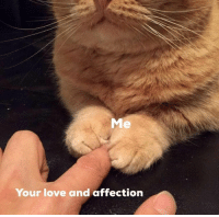 Love, Relatable, and Your Love: Me  Your love and affection relatable
