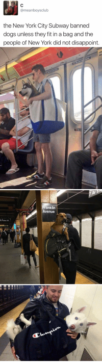 This makes me so happy https://t.co/lMY04Ec3OX: @meanboys club  the New York City Subway banned  dogs unless they fit in a bag and the  people of New York did not disappoint.   tia   AVEN  Franklin  Avenue  e&  Av-Fulton St   0  jilli This makes me so happy https://t.co/lMY04Ec3OX