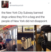Dogs, New York, and Subway: @meanboysclub  the New York City Subway banned  dogs unless they fit in a bag and the  people of New York did not disappoint.  ALVI AILEY  anklin  Avenue