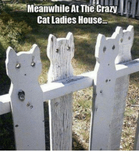 Crazy, Memes, and House: Meanwhile At The Crazy  Cat Ladies House When you dream of having a white picket fence but are also a cat enthusiast :) Via Kitty Kan