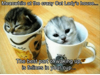Cat Memes: Meanwhile at the crazy Cat Lady's house  The best part of waking upp  is felines in your cup.