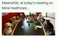 "Memes, Obama, and Target: Meanwhile, at today's meeting on  feline healthcare <p><a href=""https://obama-biden-memes.tumblr.com/post/158795666608"" class=""tumblr_blog"" target=""_blank"">obama-biden-memes</a>:</p><blockquote><p>😂</p></blockquote>"
