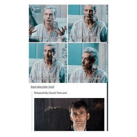 Memes, Tardis, and David Tennant: Meanwhile, David Tennant: mattsmith doctorwho eleven tardis fezesarecool DW bowtiesarecool drwho davidtennant Christophereccleston petercapaldi ten twelve nine