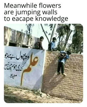 """The text on the wall says """"Knowledge is a flower that does not die in any season"""": Meanwhile flowers  are jumping walls  to eacape knowledge The text on the wall says """"Knowledge is a flower that does not die in any season"""""""