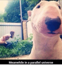 In A Parallel Universe: Meanwhile in a parallel universe