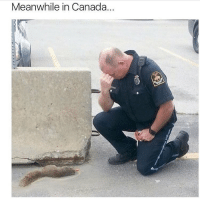 Poor tree mouse: Meanwhile in Canada. Poor tree mouse