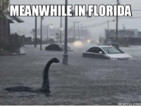 meanwhile in: MEANWHILE IN FLORIDA  MEMEFUL COM