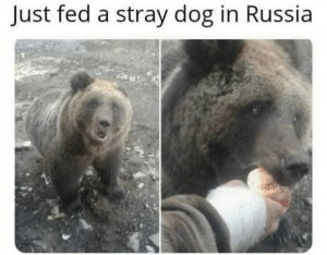 Meanwhile in russia: Meanwhile in russia