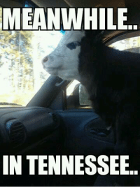 MEANWHILE  IN TENNESSEE. That's one way to do it..  ~James  Credit : Jennifer Bowling Taylor
