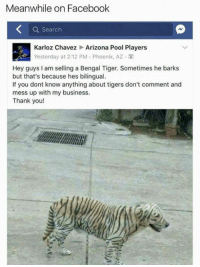 Bengal: Meanwhile on Facebook  a Search  Karloz Chavez Arizona Pool Players  Yesterday at 2:12 PM Phoenix, AZ M  Hey guys am selling a Bengal Tiger. Sometimes he barks  but that's because hes bilingual.  If you dont know anything about tigers don't comment and  mess up with my business.  Thank you!