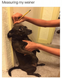 Memes, Twitter, and Good Morning: Measuring my weiner good morning to people who share my level of immaturity only [twitter: KillJerry_]