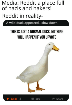 Reddit, Duck, and Wild: Media: Reddit a place full  of nazis and hakers!  Reddit in reality  A wild duck appeared...slow down  THIS IS JUST A NORMAL DUCK, NOTHING  WILL HAPPEN IF YOU UPVOTE  會12,8k ↓  甲203  Share Its Carl the nazi duck