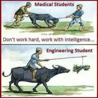 Different Between Medical Student and Engineering Student: Medical Students  Don't work hard, work with intelligence  Engineering Student Different Between Medical Student and Engineering Student