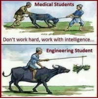 Work, Engineering, and Student: Medical Students  Don't work hard, work with intelligence...  Engineering Student