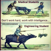 Medical Students  Don't work hard, work with intelligence...  @OILANDGASMEMES  Engineering Student TAG an engineer ! 👇👇 . @oilandgasmemes
